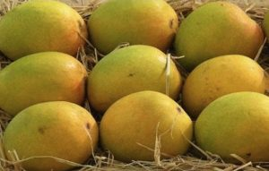 Alphonso Mangoes have the most amazing flavour