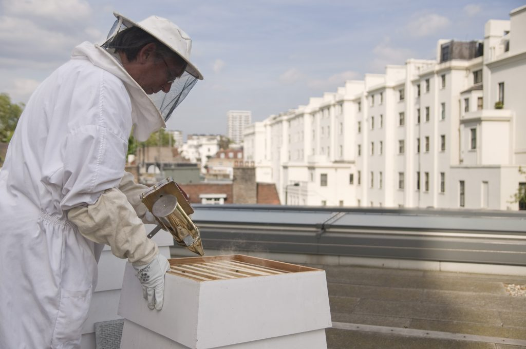 Lancaster London Bees 1 -CREDIT TO RICHARD TWILTON.jpg