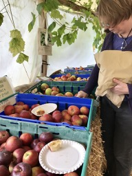 A must for any Apple Day visitor, tasting and purchasing apples