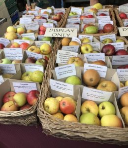 A small selection of Gloucestershire apples
